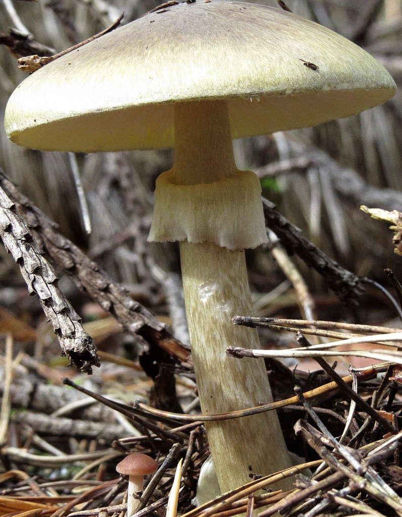 другой грибы поганки фото с названиями создаёте дополнительный эвакуационный