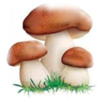 Заставка грибной энциклопедии