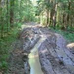 Дорога к озеру Золотая Вешка